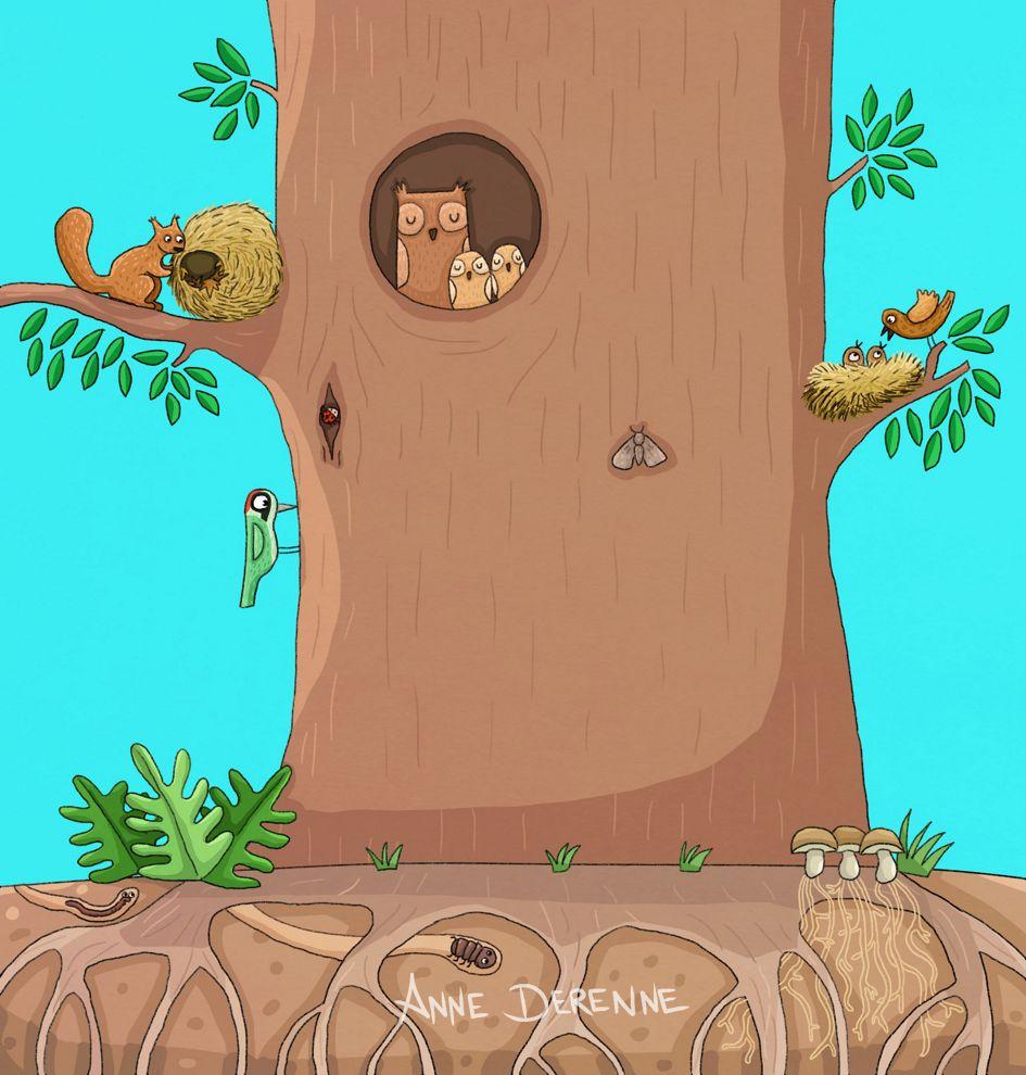 Le tronc des arbres - LR - Anne Derenne
